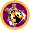 Moddlebug_badge